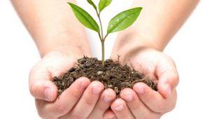 Daha yeşil bir doğa için Ağaç dikelim !