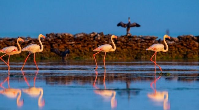 Katar florası ve faunası turizm için eşsiz bir rota oluşturuyor