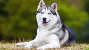 Yaşamları Boyunca Acı Çekmeye Mahkum Köpek Türleri