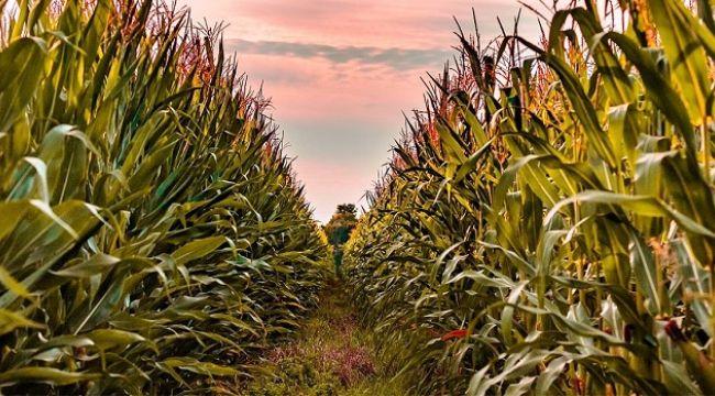 Tarım ve Turizm Aynı Projede Buluştu !